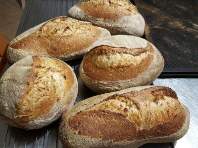 pane di grano tenero